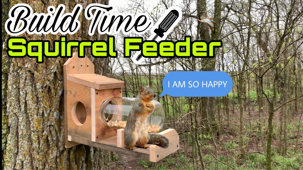 HOW TO BUILD A SQUIRREL FEEDER: Jerry The Adorable Squirrel Is Going To Love This